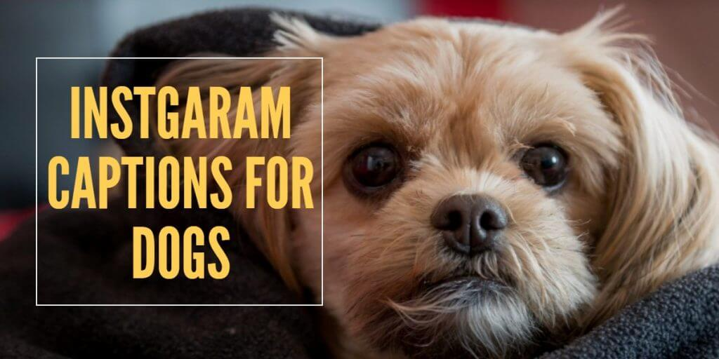 instagram-captions-for-dogs